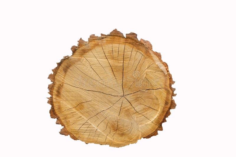 Cut oak log isolated royalty free stock photos