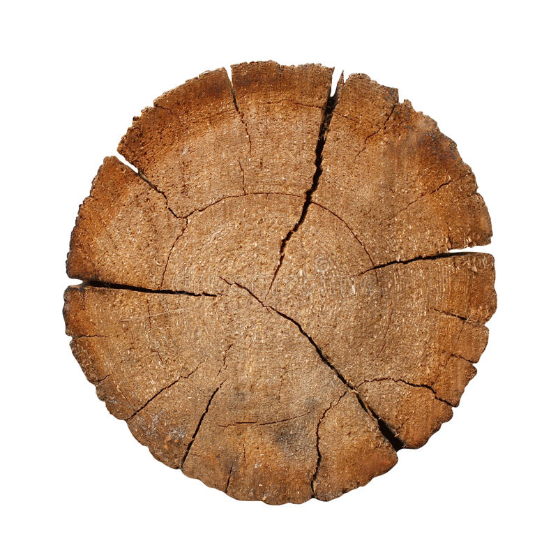 Free Cut Of A Log Stock Photography - 9398972