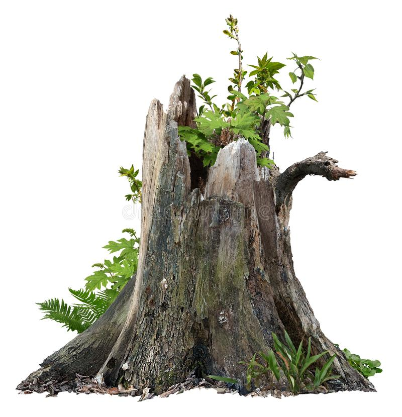 Cut out tree stump. Broken tree with green foliage royalty free stock photo