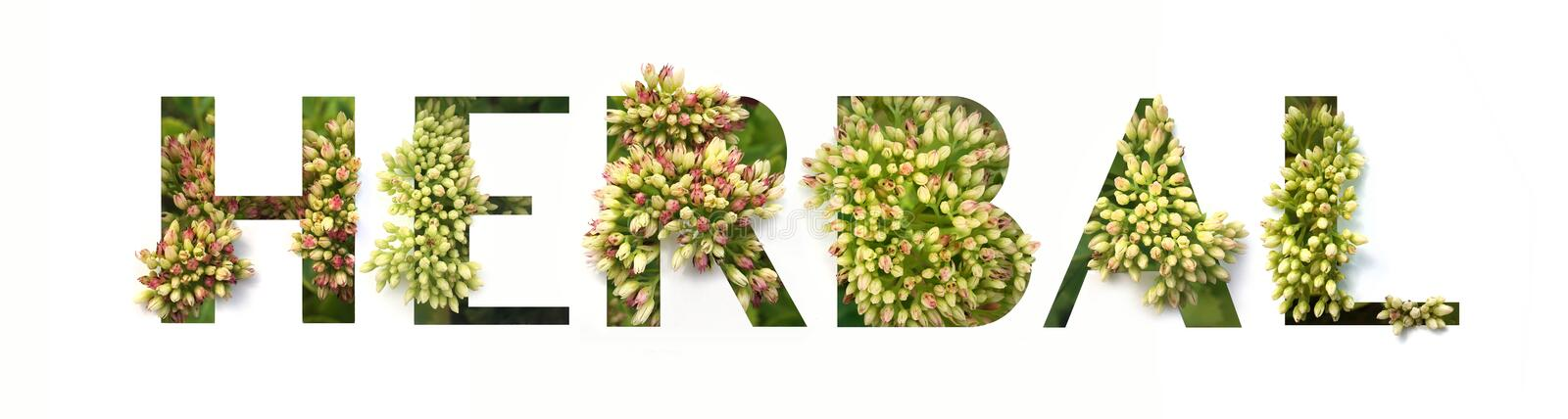 Cut out word HERBAL with growing plant inside. Organic production concept stock photography