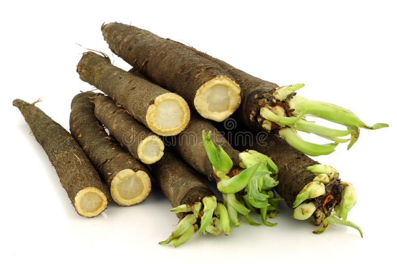 Download Cut salsify stock image. Image of horizontal, plant, freshness - 19100679
