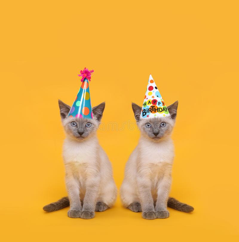 Cut Siamese Party Cats Wearing Birthday Hats royalty free stock photos