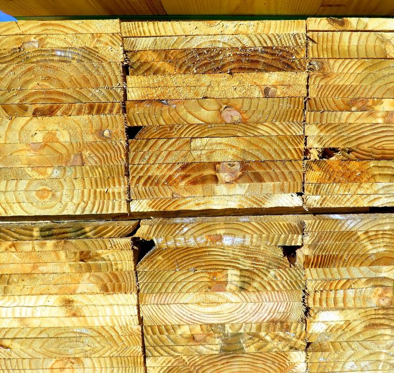 Cut and sliced tree for wood industry. royalty free stock image