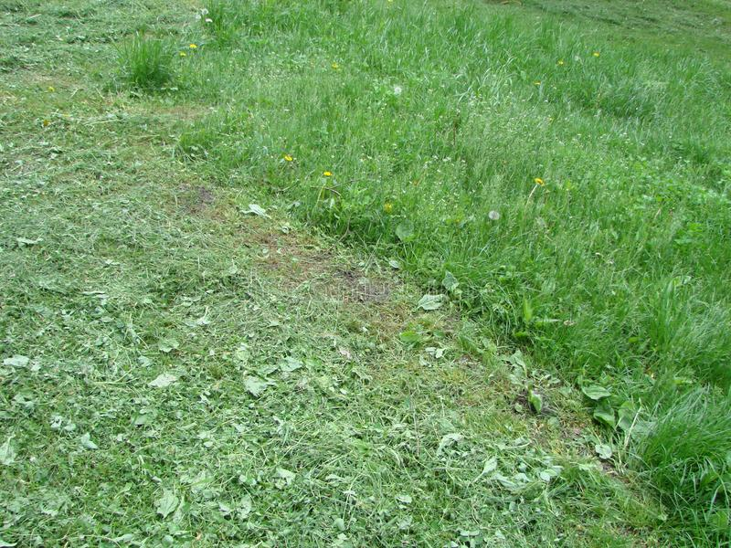 Cut strip of green grass. Mowing the lawn. Focus stock photos