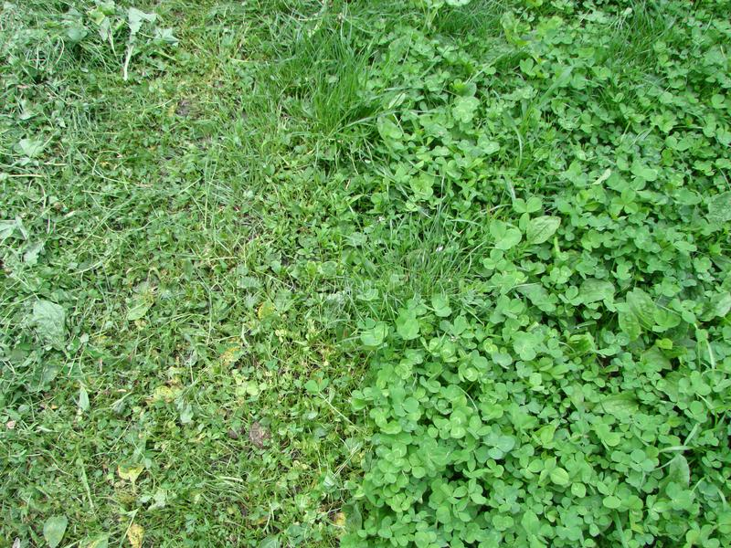 Cut strip of green grass. Mowing the lawn. Focus stock photography