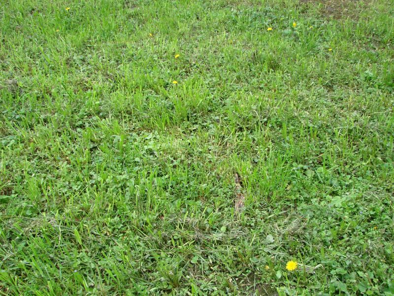 Cut strip of green grass. Mowing the lawn. Focus stock photo