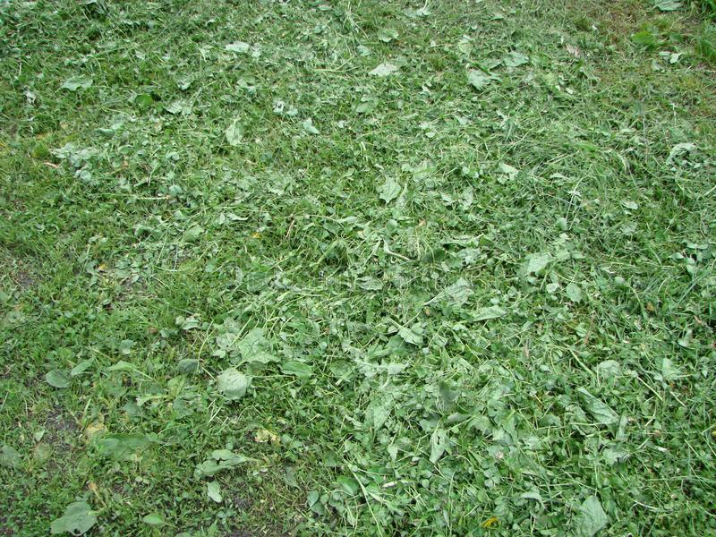 Cut strip of green grass. Mowing the lawn. Focus royalty free stock photo