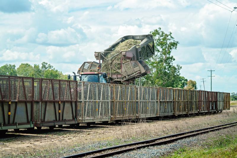 Cut Sugar Cane Being Loaded Onto Rail For The Refinery. Harvested sugar cane being tipped into bins to take to the sugar mill refinery to be crushed, Australia royalty free stock photography