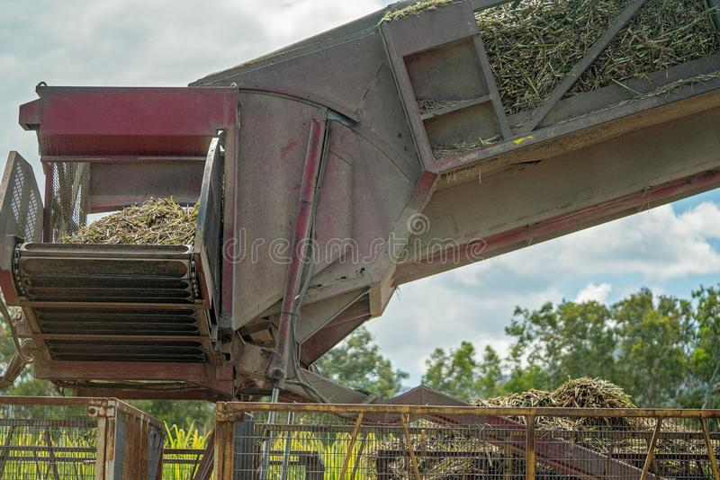 Cut Sugar Cane Being Loaded Onto Rail For The Refinery. Harvested sugar cane being tipped into bins to take to the sugar mill refinery to be crushed, Australia stock image