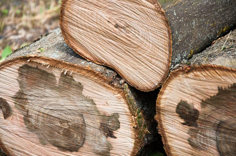 Cut thick tree trunk. Wood texture. stock images