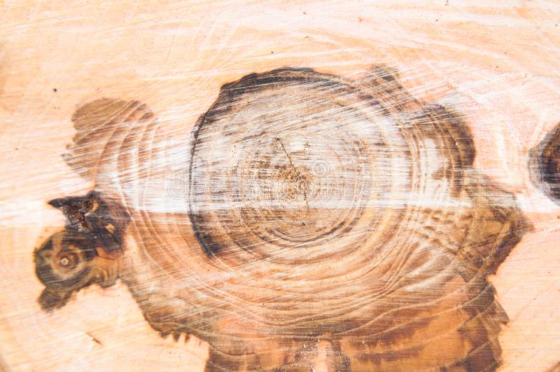 Cut thick tree trunk. Wood texture. stock image