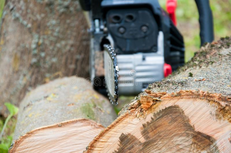 Cut thick tree trunk. Wood texture. Chainsaw cuts wood. stock images
