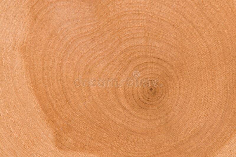 Cut of tree royalty free stock photo