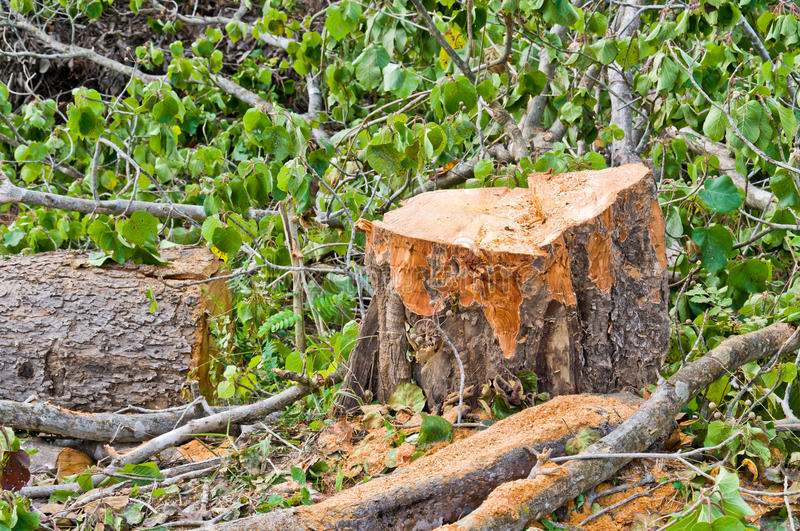 Download Cut tree stock image. Image of wood, detail, nature, tree - 23899089