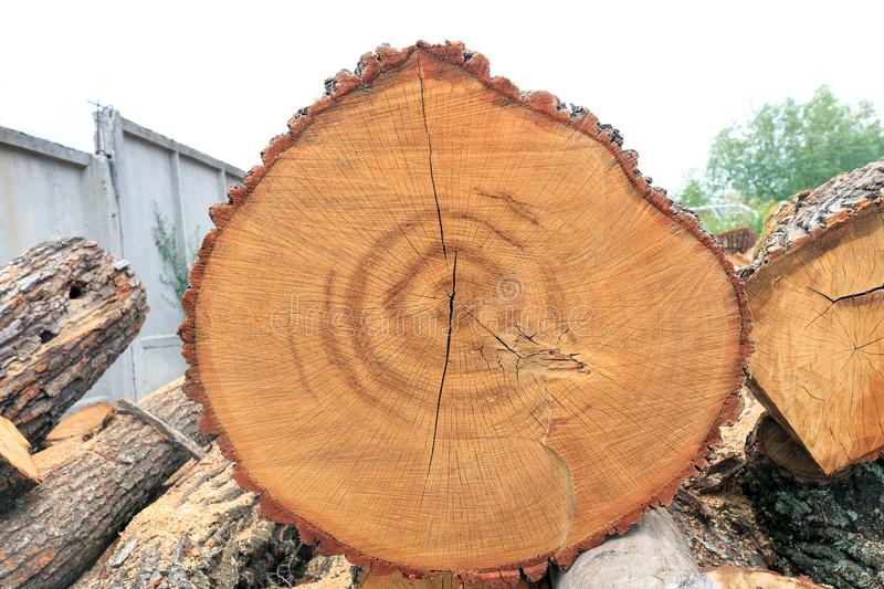 Cut tree with annual ring. Stack of firewood. Top view royalty free stock photography