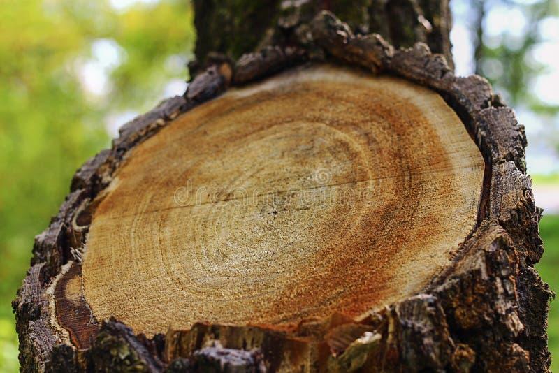 Cut tree branch stock image