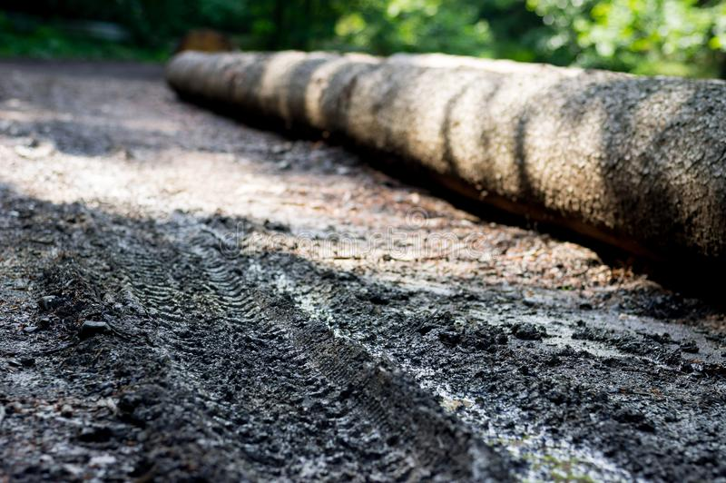 Cut tree in the forest, prepared for transport. Large blurring of the background, view of the ruts and traces of the wheels of the. Car carrying tree stock images