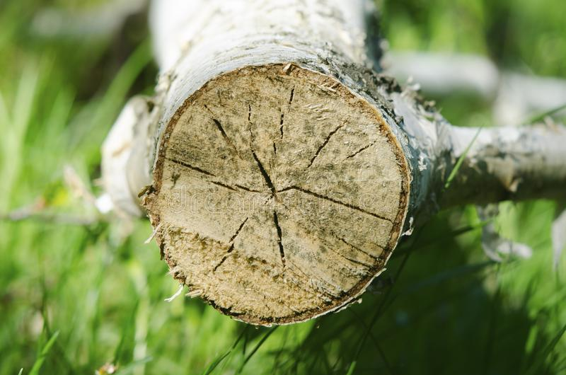 Chopped tree stump showing rings royalty free stock photography
