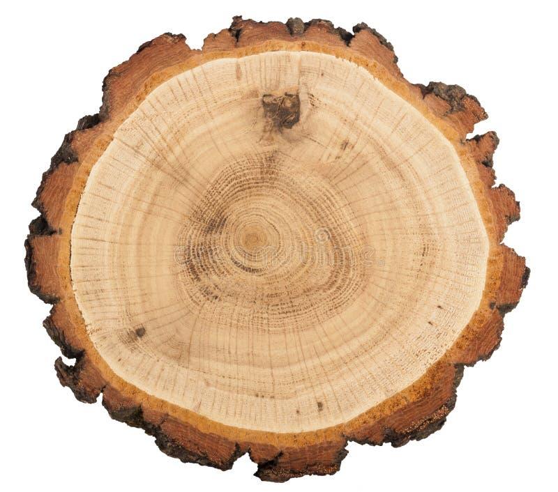 Cut of tree stock photos