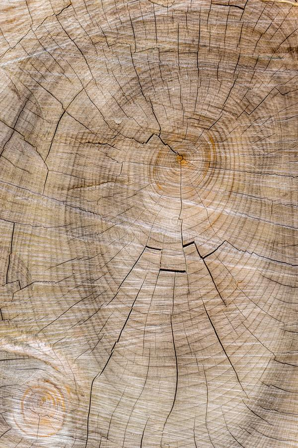 Cut through tree section with rings and cracks portrait. For background royalty free stock photos