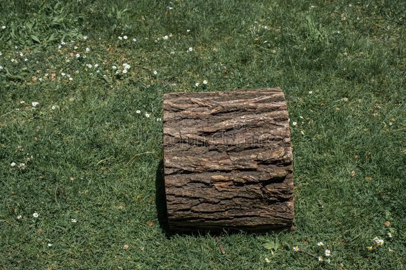 Cut tree stump in view. Outdoors royalty free stock image