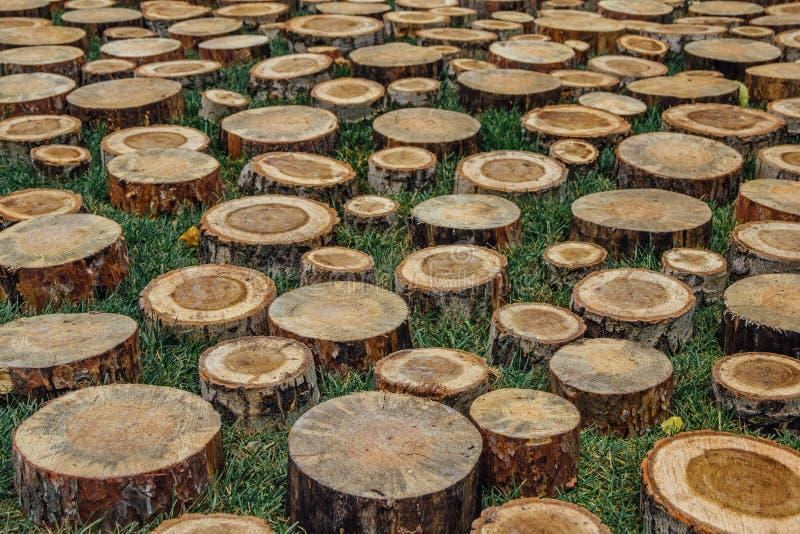 Cut tree stumps royalty free stock photography