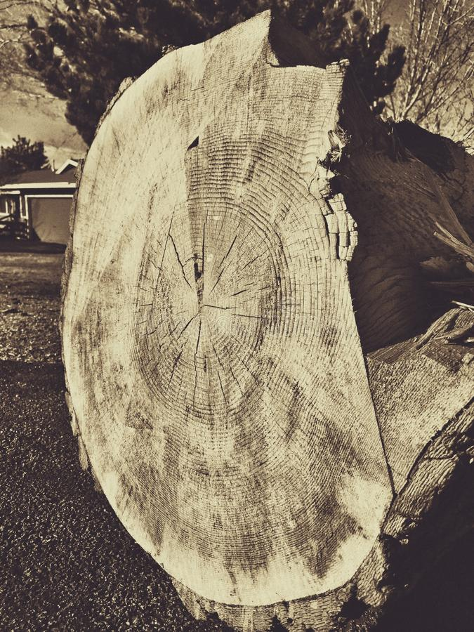 Tree rings in sepia royalty free stock photo