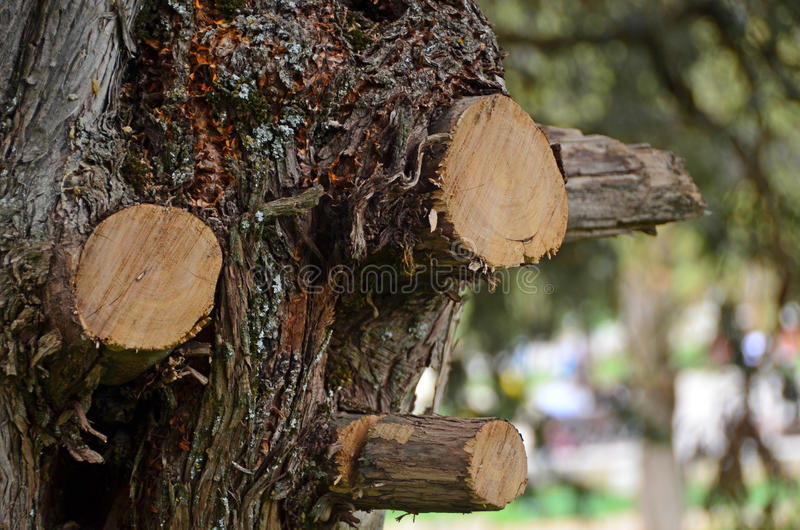 Cut tree trunk royalty free stock photography