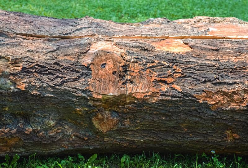 Cut tree trunk royalty free stock photos