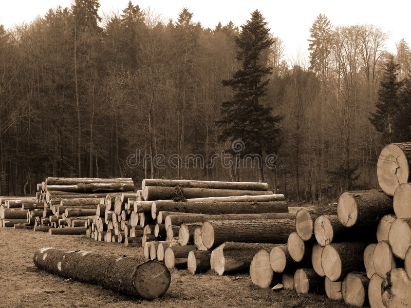 Download Cut Trees Stock Photography - Image: 1367282