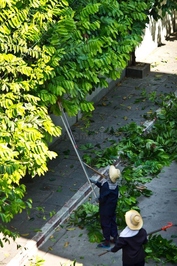Free Cut Trees Royalty Free Stock Image - 30865616