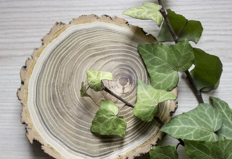 The cut trees and branches of ivy. Stylish decoration. Vintage royalty free stock image
