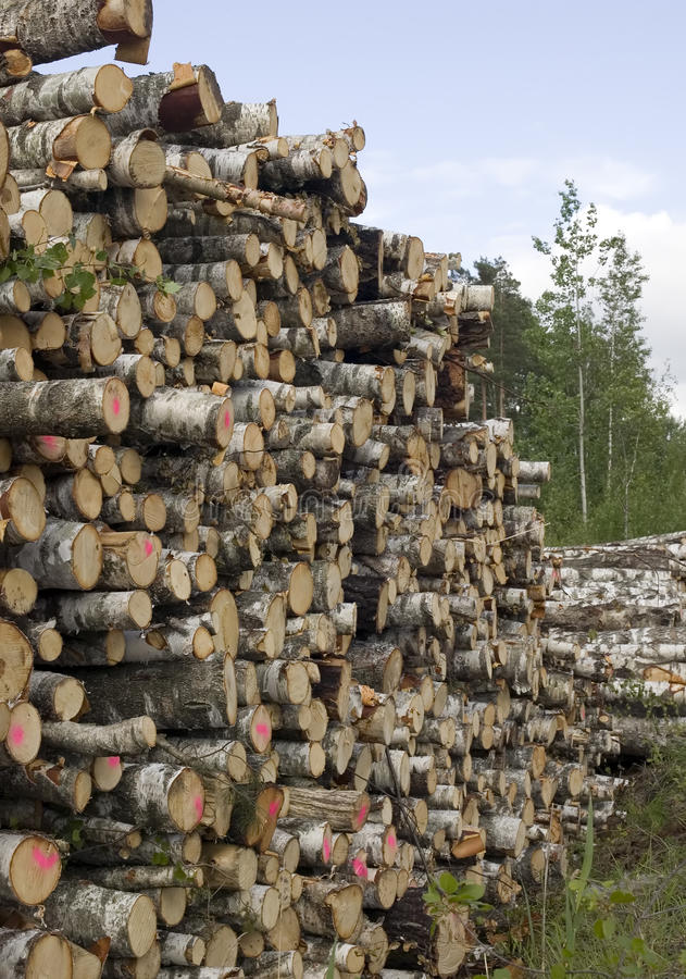 Download Cut Trees In Nature Background Stock Image - Image: 14798827