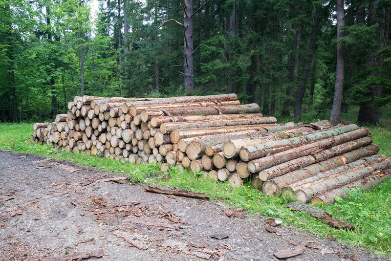 Cut trees trunks heap stack, logging industry forest lumber royalty free stock images