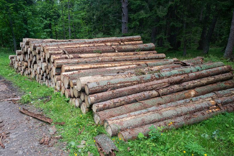 Cut trees trunks heap stack, logging industry forest lumber stock photos