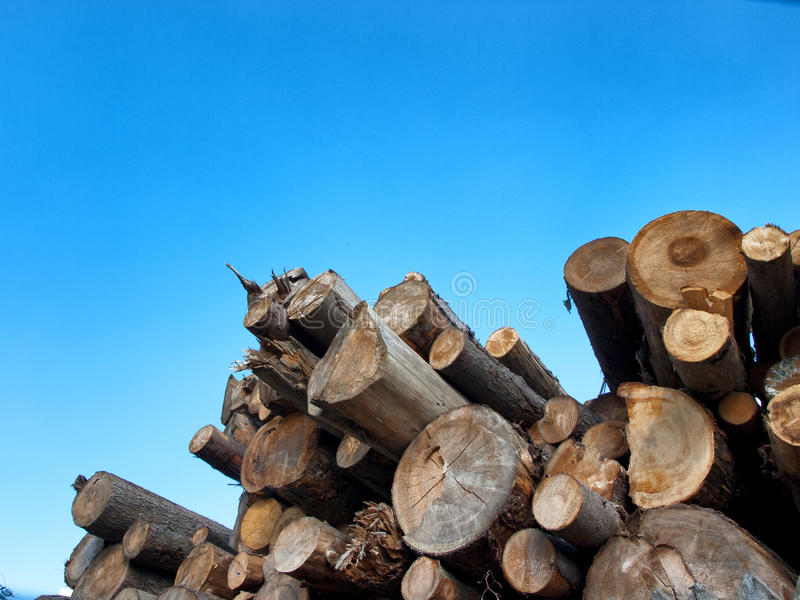 Download Cut trees stock photo. Image of wood, pattern, section - 32713378
