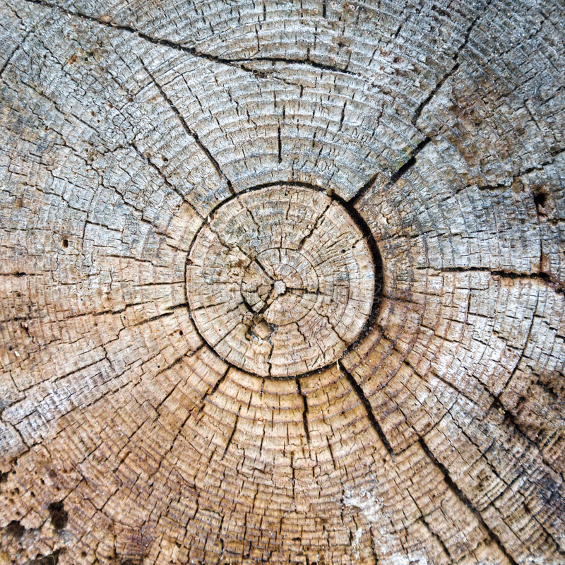 Cut of a trunk. Of an old tree royalty free stock photography