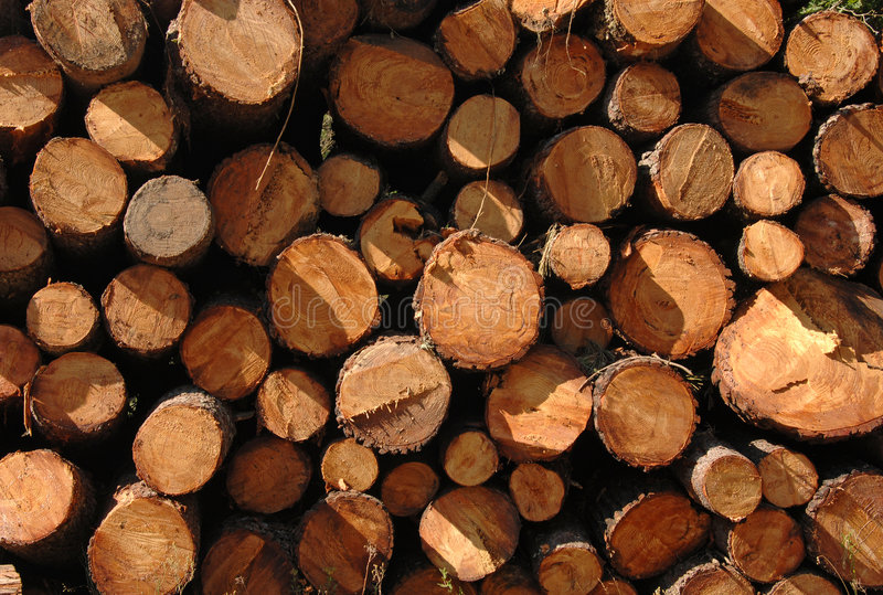 Cut trunks stacked in forest stock photography