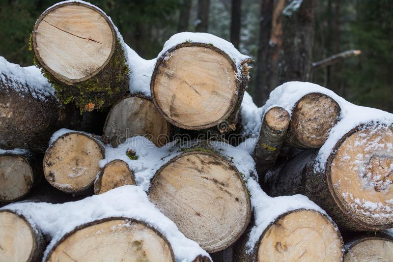 The cut trunks of trees lie under snow. winter logging. firewood. The cut trunks of trees lie under snow. winter logging stock image