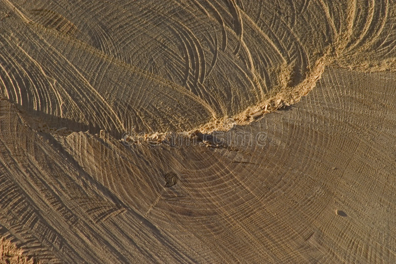 Download Cut Wood stock image. Image of rings, forest, chips, firewood - 162215