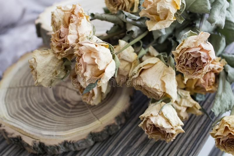 The cut wood with dried roses; dry roses on a cut tree. Vintage decoration stock images