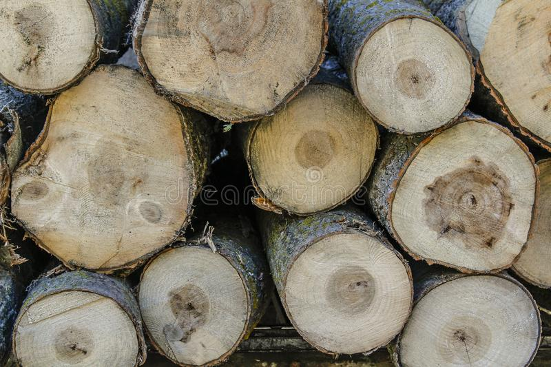 Cut wood in the farm. Logs of wood cut and photographed frontally royalty free stock photo