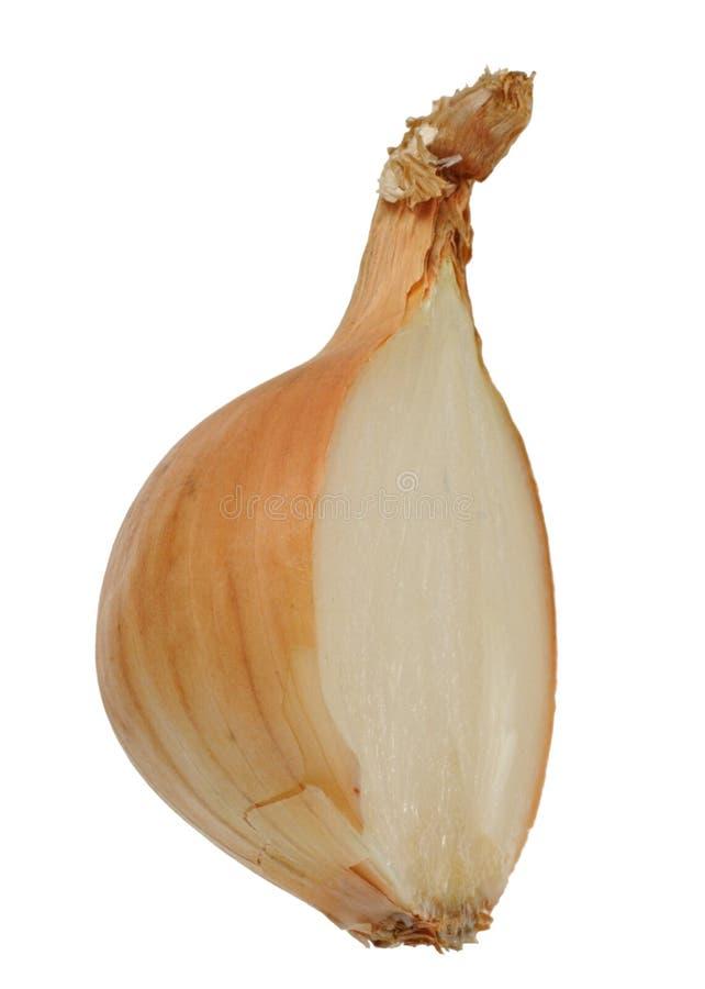 Download Cut Yellow Onion stock image. Image of life, closeup - 12179367