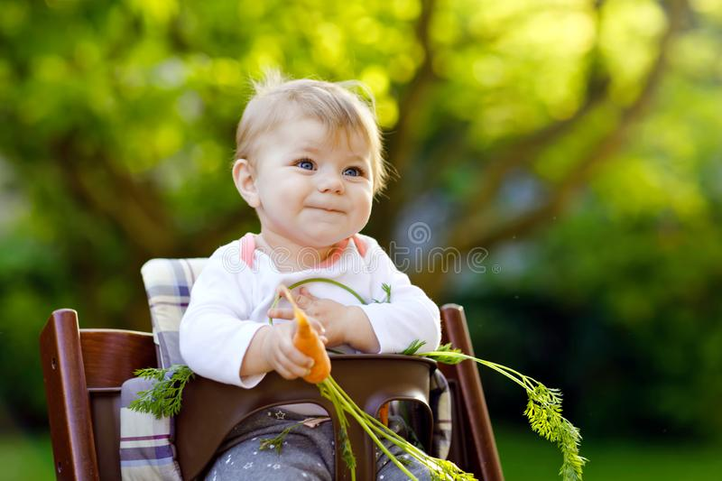 Cute adorable baby girl holding and eating fresh carrot. Beatuiful child having healthy snack. Baby girl sitting in high. Chair. Little kid of 6 months outdoors royalty free stock image