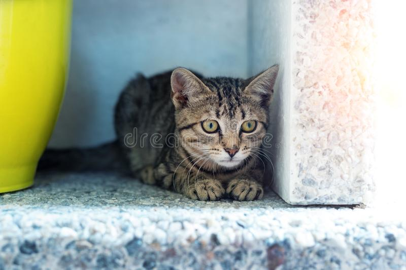 Cute adorable funny small tabby kitten sitting in dark corner while hunting or stalking outdoors. Beautiful young little cat. Playing at home backyard, animal royalty free stock image