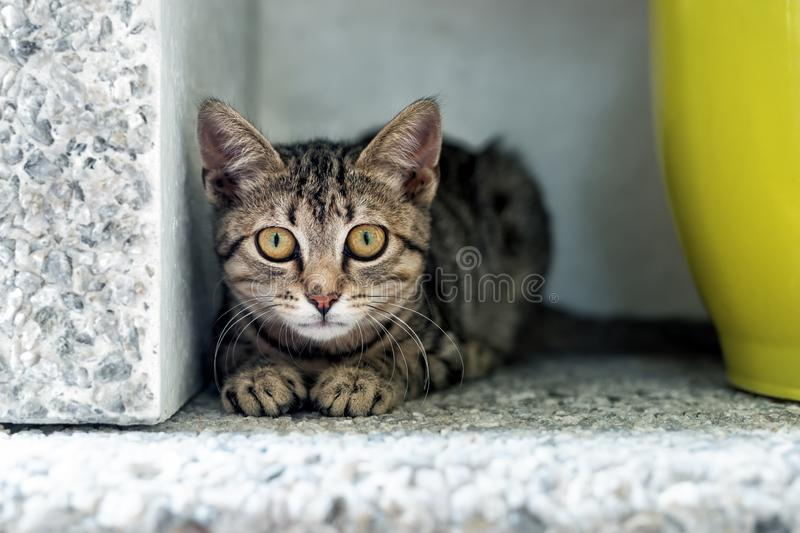 Cute adorable funny small tabby kitten sitting in dark corner while hunting or stalking outdoors. Beautiful young little cat. Playing at home backyard, animal stock photography