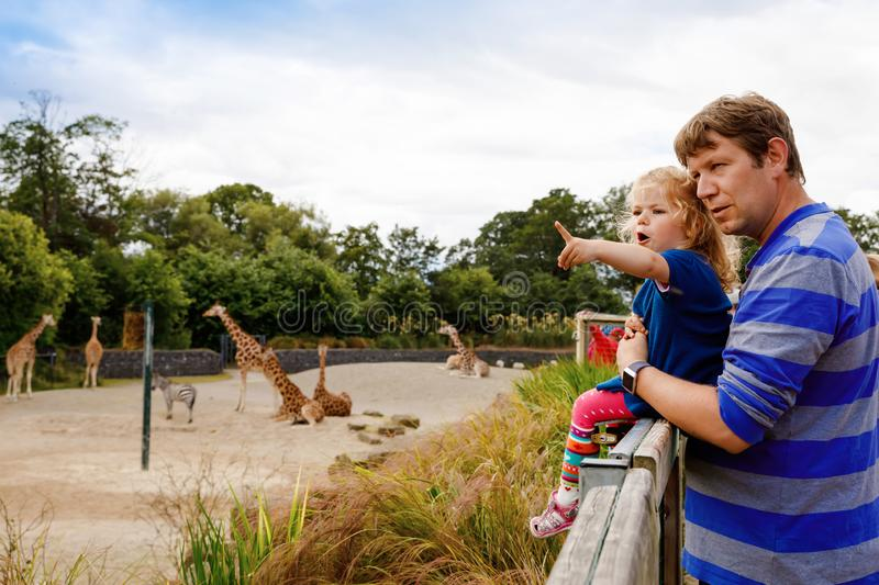 Cute adorable toddler girl and father watching and feeding giraffe in zoo. Happy baby child, daughter and dad, family stock photos