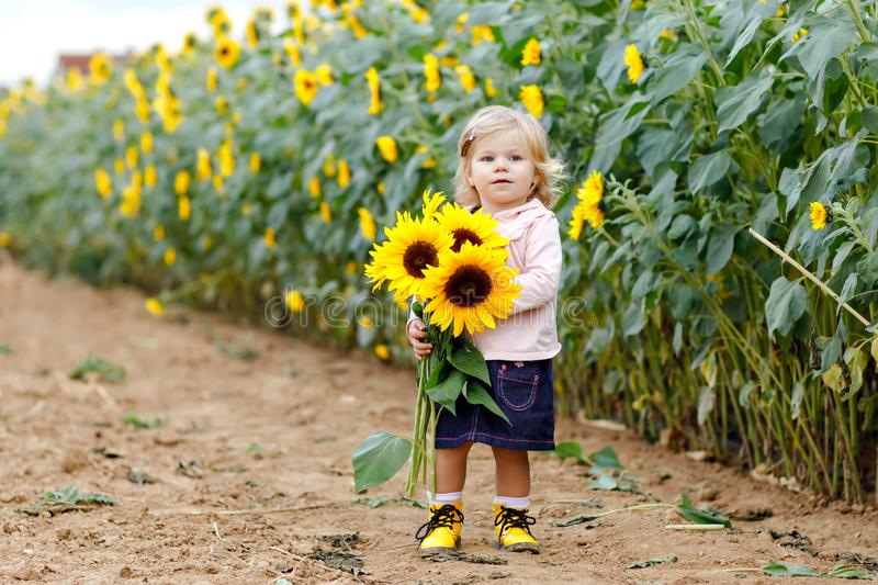 Cute adorable toddler girl on sunflower field with yellow flowers. Beautiful baby child with blond hairs. Happy healthy stock photos