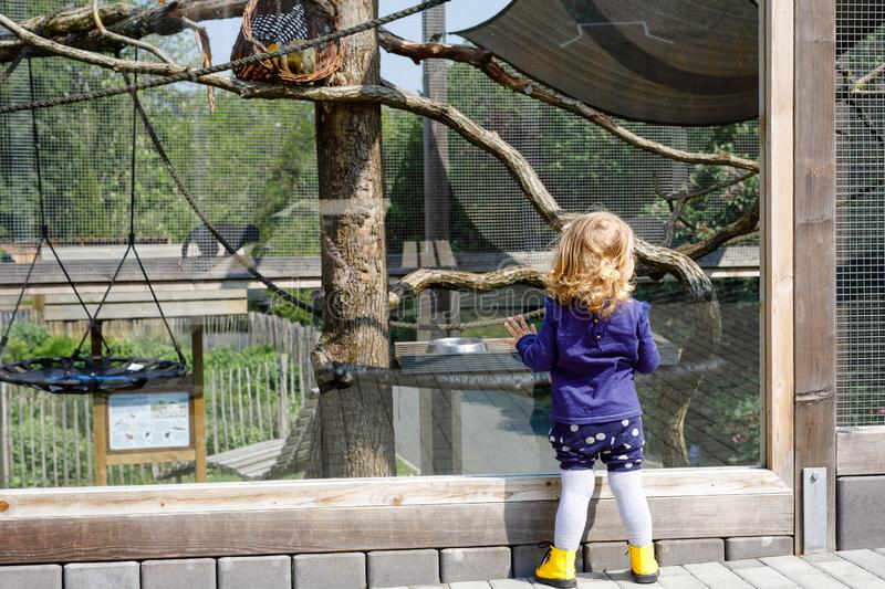 Cute adorable toddler girl watching funny monkeys on weedend or day trip to a zoo. Baby child observing wild animals at stock images