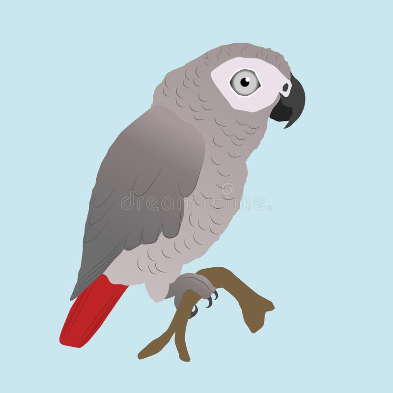 Cute African grey parrot vector vector illustration